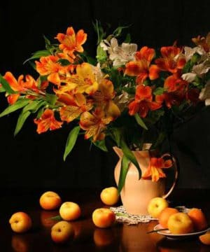 Fragrance oil - Apricot & Freesia - 100 ml