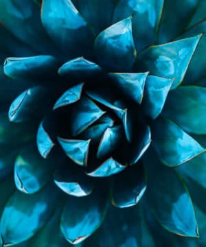 Fragrance Oil - Blue Agave - 100 ml