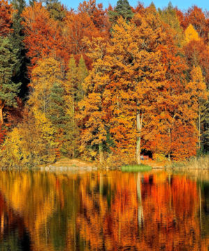 Fragrance Oil - Autumn Equinox - 100 ml