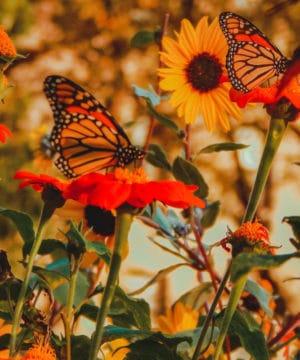 Fragrance Oil - Butterfly Garden - 100 ml