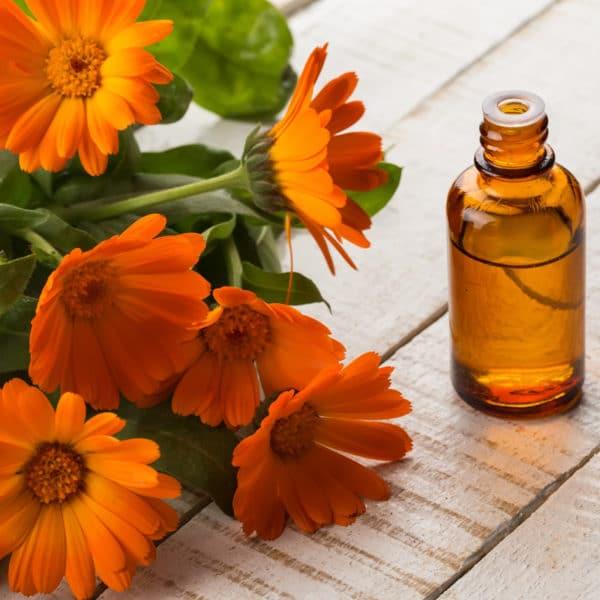 Calendula ätherisches Öl