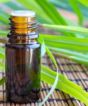 Citronella etherische olie - 30 ml