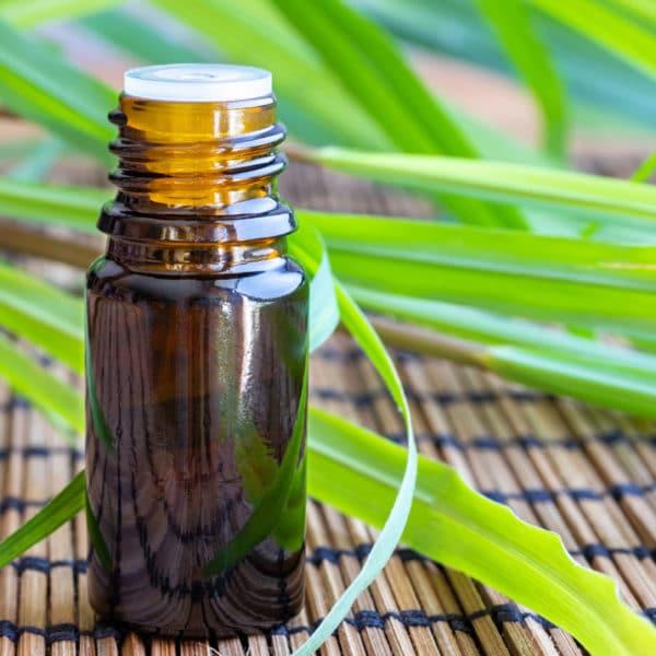 Citronella ätherisches Öl