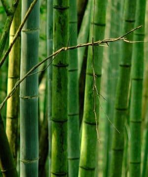 Geurolie - Frisse Bamboe