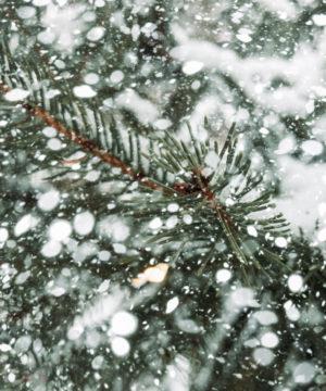 Aceite de fragancia - Abeto congelado