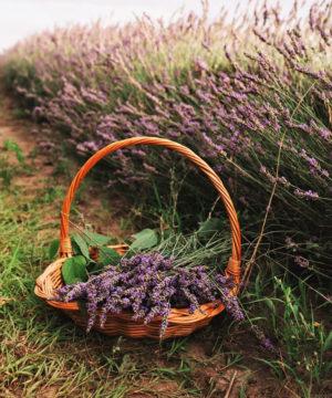 Geurolie - Vredige Lavendel