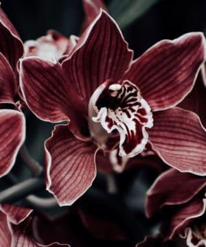 Geurolie - Betoverde Orchidee
