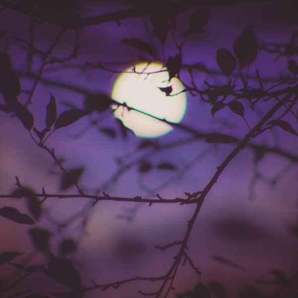 Geurolie - Viooltje Moondance